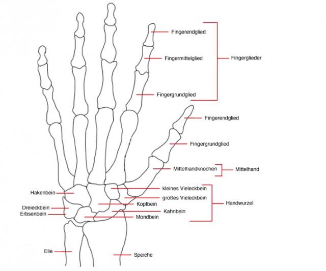 Die Hand | Nagelwissen